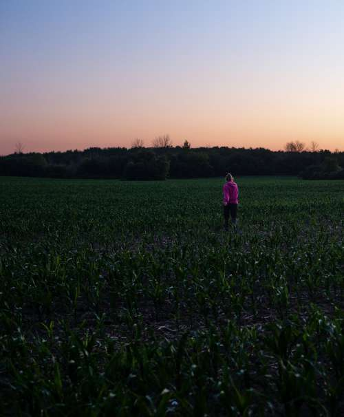 Person In Pink Walks In A Field Of Small Corn Plants Photo