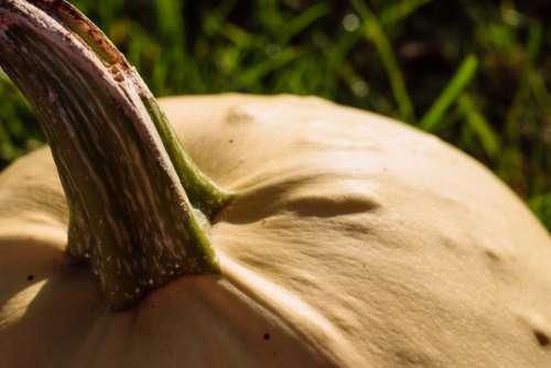 Pale yellow pumpkin closeup 4
