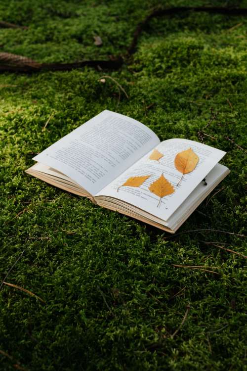 An open book with dried leaves lies on the moss in the forest